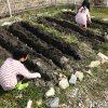 楽しい家庭菜園!今年も庭の畑にジャガイモを植えました♪