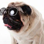 クルマ運転用のサングラスを新調したい♪