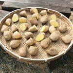 楽しい家庭菜園!今年も庭にジャガイモ(メークイン)を植えました♪