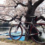 今年も兵庫県小野市の桜を満喫!お花見ポタリング2018♪