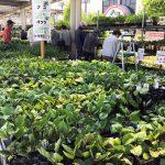 楽しい家庭菜園!今年も子ども達と夏野菜を植えました♪