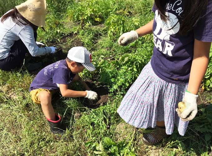 家族でジャガイモ掘り