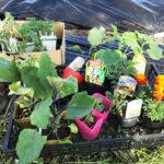 楽しい家庭菜園!今年も庭の畑に夏野菜を植えました♪