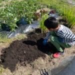 楽しい家庭菜園!今年も庭の隅の小さな畑に夏野菜を植えました♪