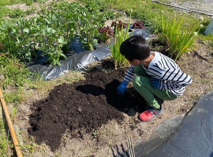 家庭菜園に夏野菜